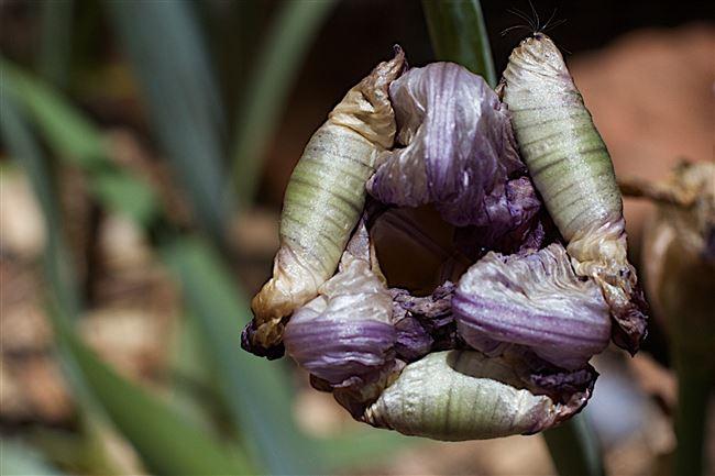 Отзывы о Aerin Iris Meadow Eau de Parfum