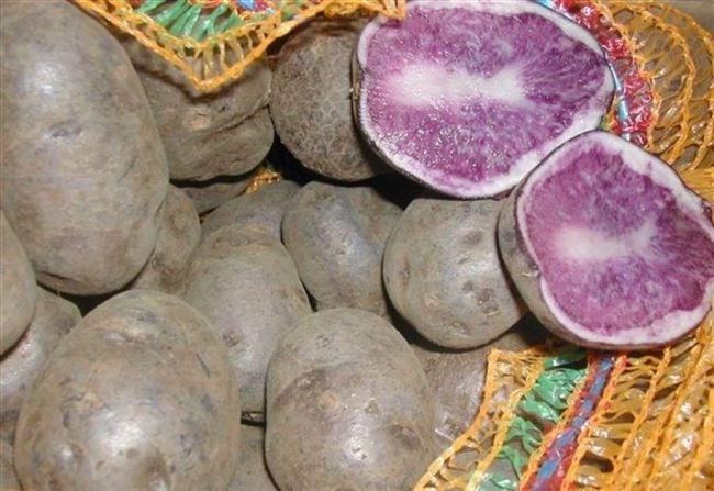 Характеристика картофеля Гурман