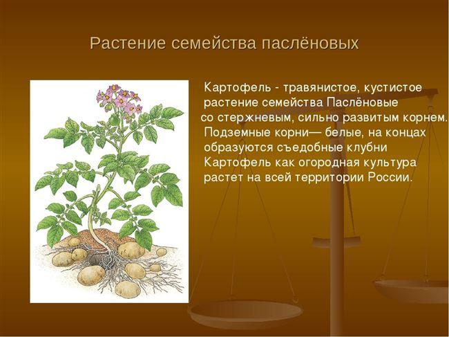 Растения и плода