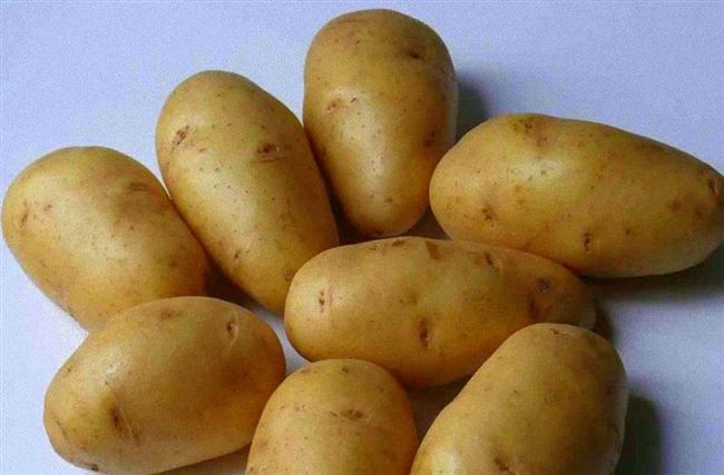 Посадка и уход за картофелем Лорх