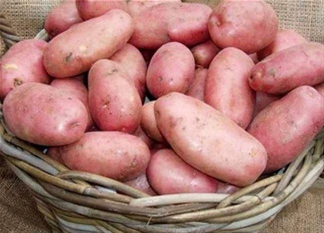 Плюсы и минусы сорта картофеля Ред Леди