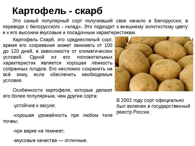 Какое размножение у картофеля