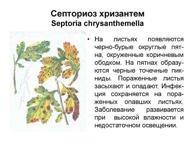 Септориоз