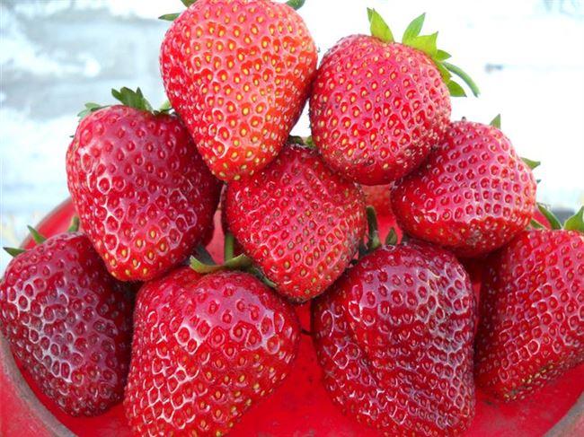 Внешний вид и вкус ягод
