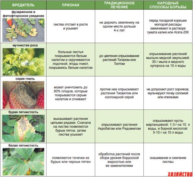 Таблица: борьба с болезнями