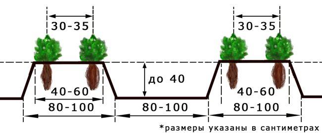 Схема и технология посадки в грунт