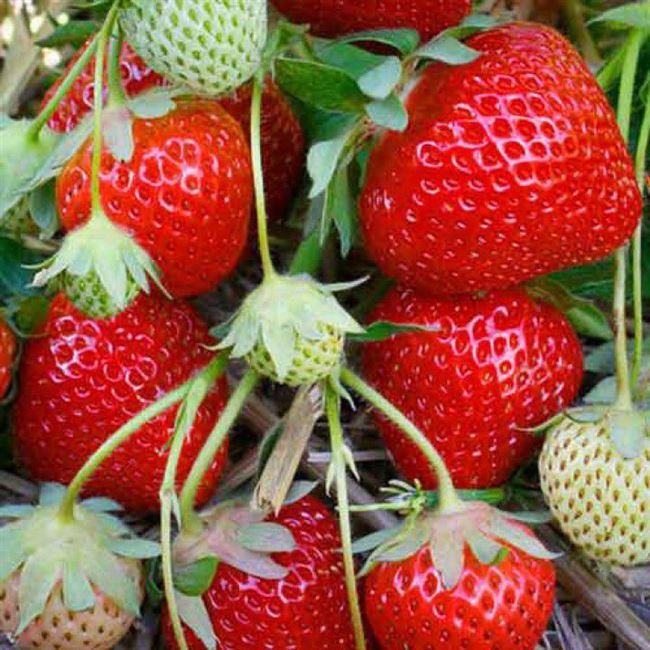 Кусты и плоды