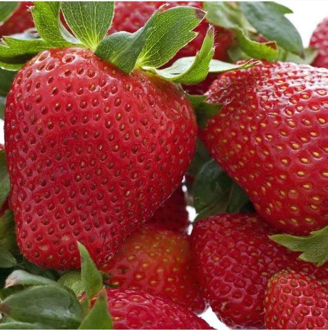 Описание ягод