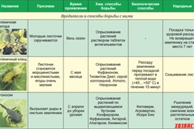 Агротехнические методы защиты клубники от вредителей