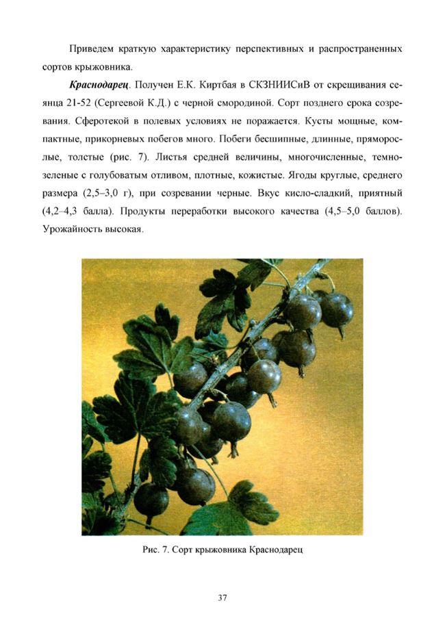 Характеристика и описание кустов