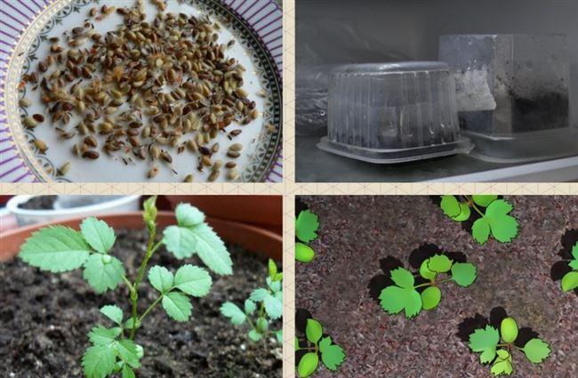 Подготовка семян