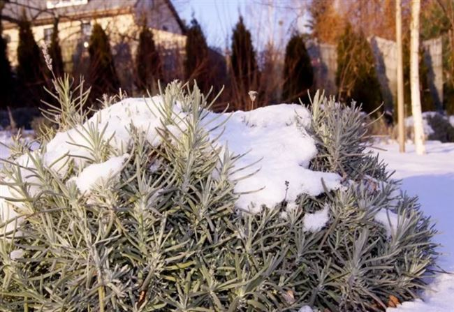 Подготовка к зиме