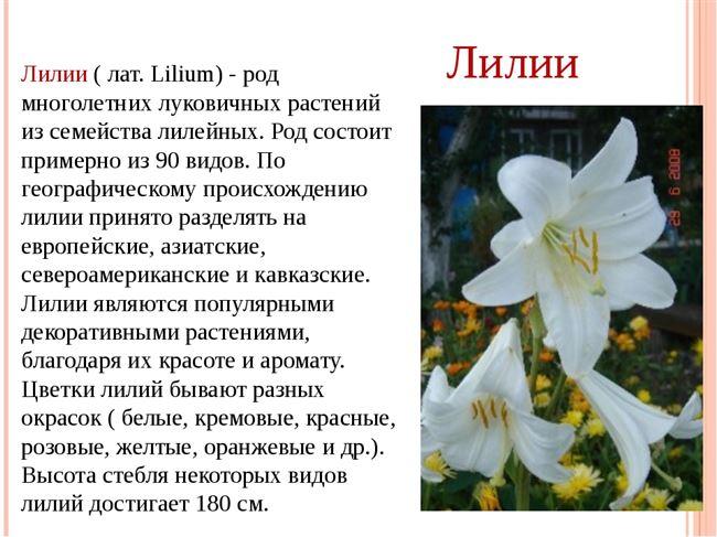 Русские истории