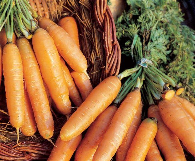Посадка и уход за морковью Амстердамская