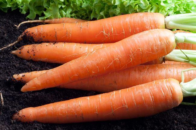 Особенности ухода за морковью