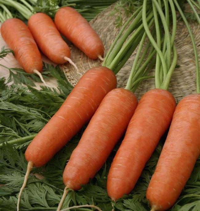 Морковь Карини (500 г), семена, уход, посадка