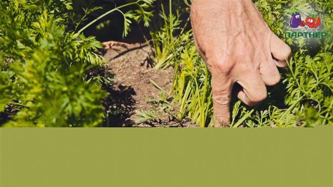 Прореживание и борьба с сорняками