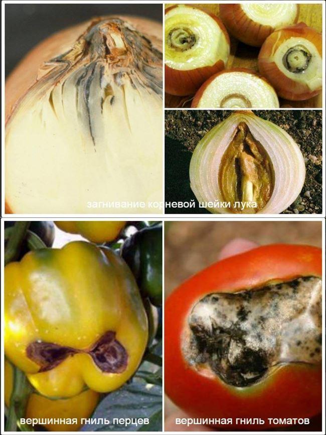 Вершинная гниль перца – лечение в теплице, фото, обработка препаратами, народными средствами