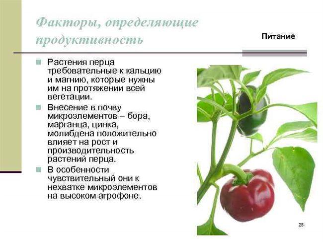Описание гибрида, строение растения