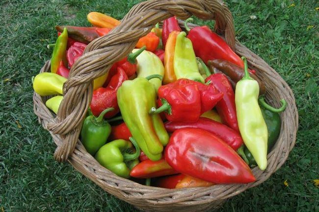 Обрезка, формирование и сбор урожая