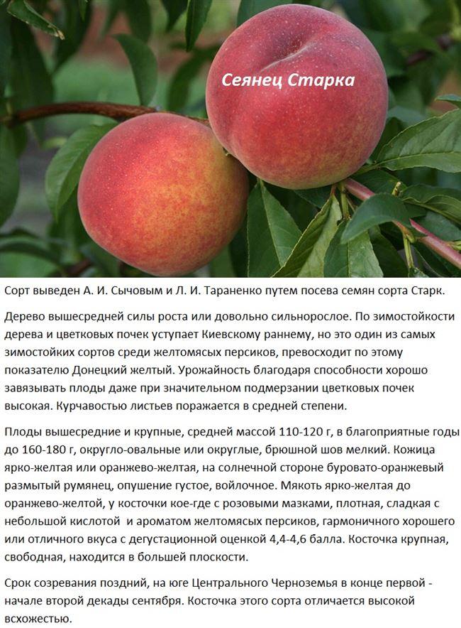 Правила ухода за персиком