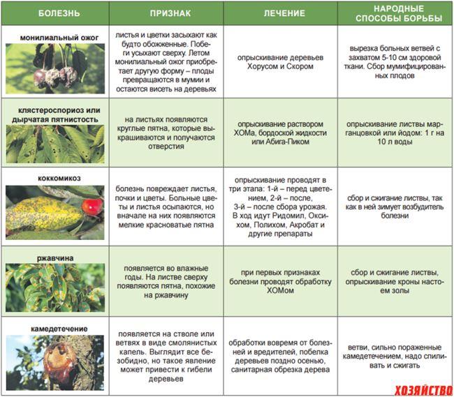 Профилактика и защита от вредителей и болезней