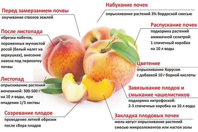 Схема подкормки