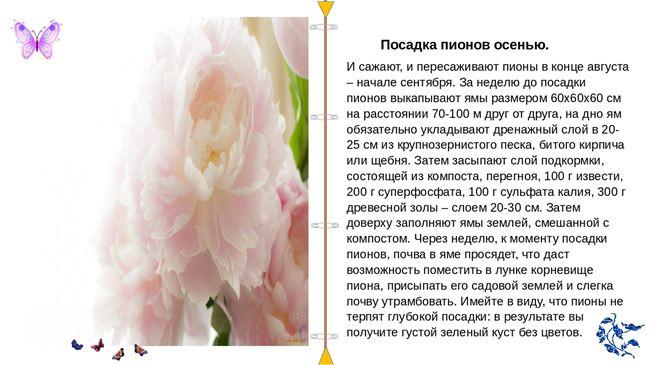 Размножение пионов в Сибири