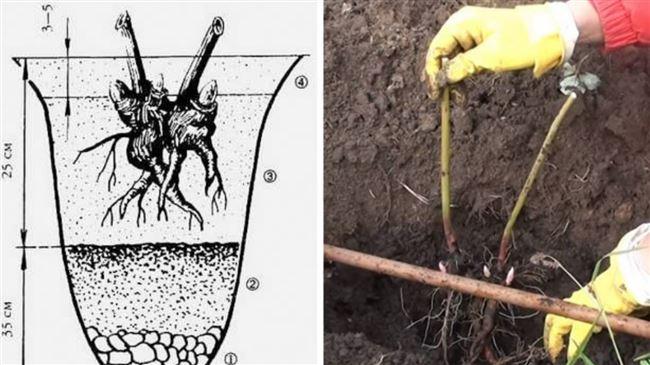 Размножение пионов методом подрезки