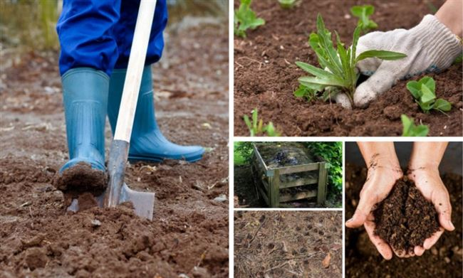 Подготовка почвы и саженца