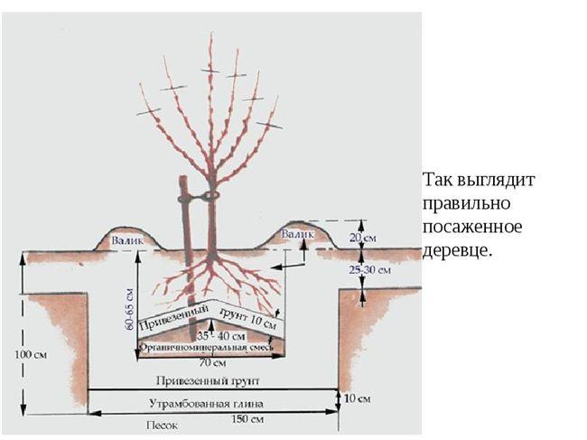 Подготовка ямы и схема посадки