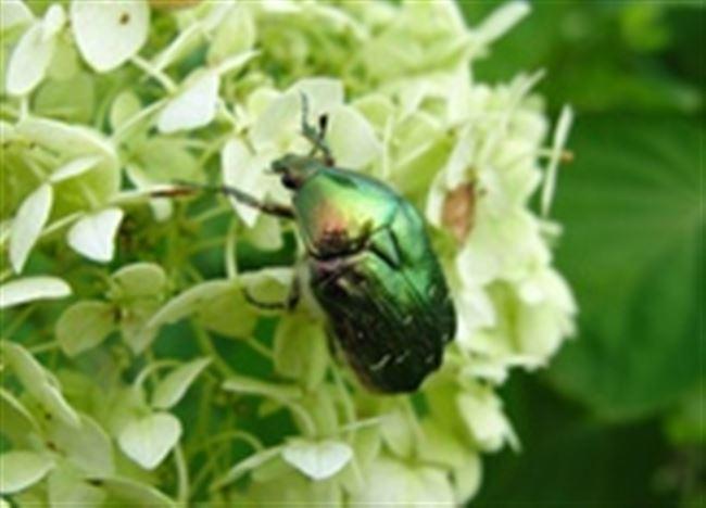 Морфологические признаки насекомого