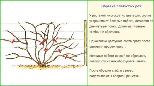 Особенности ухода за кустарником