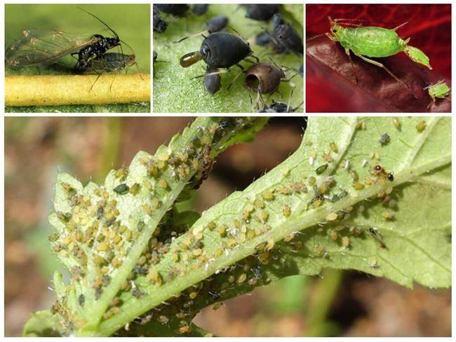 Причины и признаки нападения насекомого