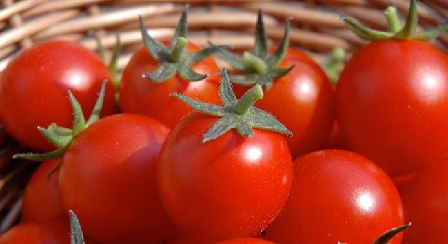 История появления томатов в Европе