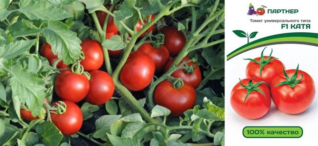 Регион и условия выращивания