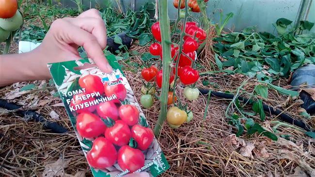 Как формировать томаты, видео