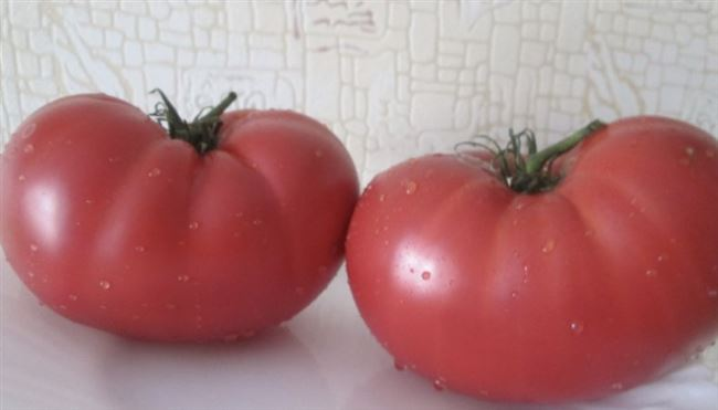 Характеристика томата, его достоинства и недостатки