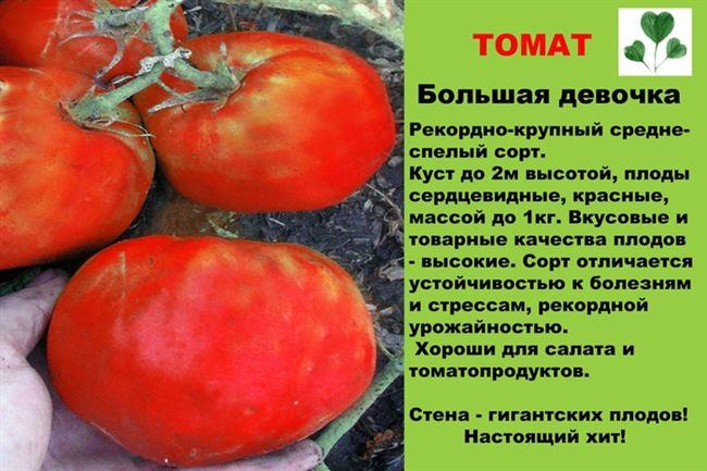 Краткое описание и вкусовые качества плодов