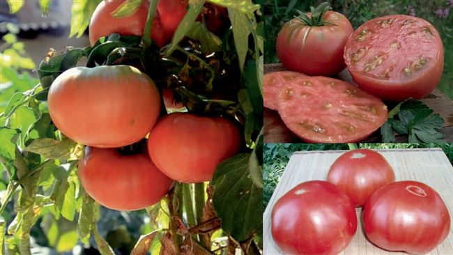 Плюсы и минусы помидоров