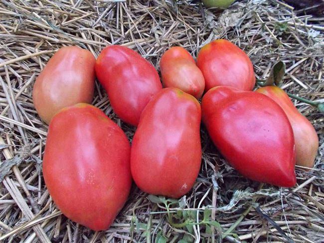 Описание сорта томата Стаканы розовые минусинские, отзывы, фото