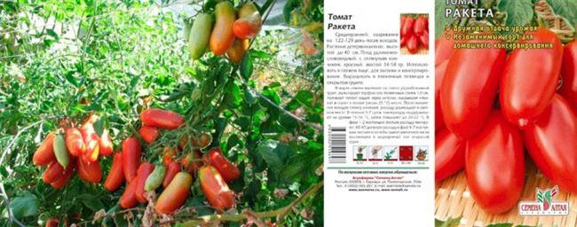 Урожайность томата Ракета