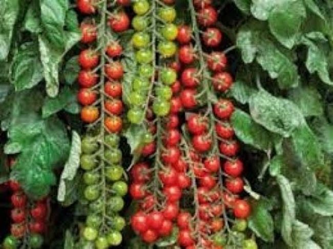 Последующий уход в процессе выращивания
