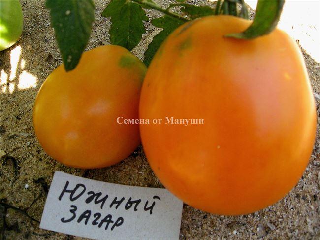 Описание томата Южный загар