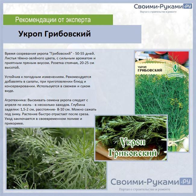 Подготовка почвы и посадочного материала