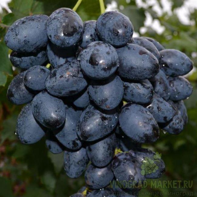 Область применения плодов