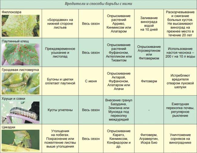 Профилактика вредителей и болезней