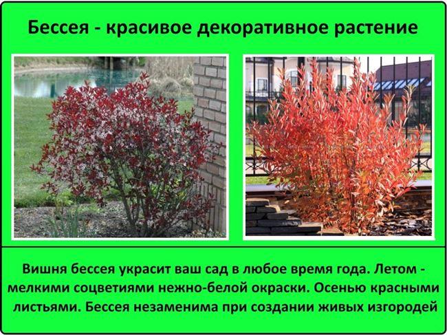Особенности выращивания и тонкости ухода