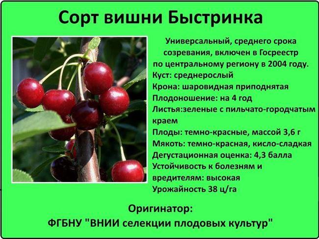 Урожайность, плодоношение