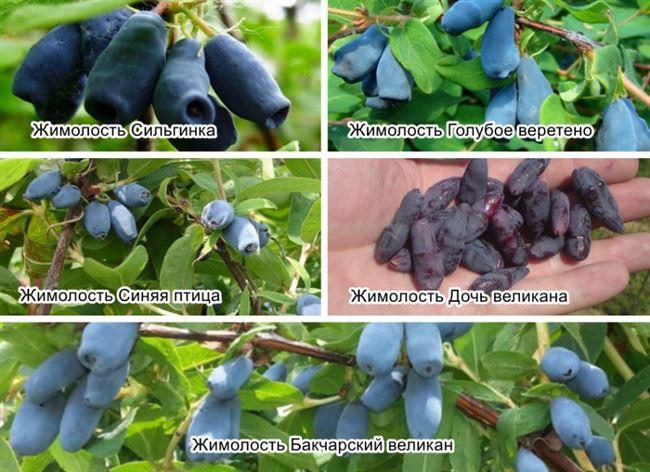 Советы и отзывы опытных садоводов